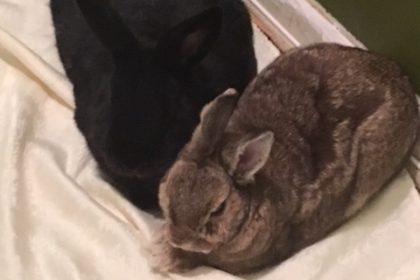 Sherrie is on her bunnymoon