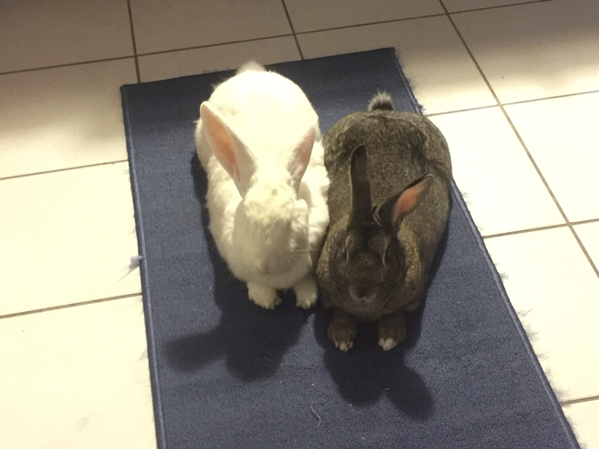 The story of Petey and Gracie, as told by their adopter